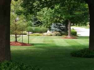 view of newly cut lawn in Kitchener between two tall trees